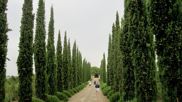 Stunning coutryside full of elegant cypress trees and hidden treasures
