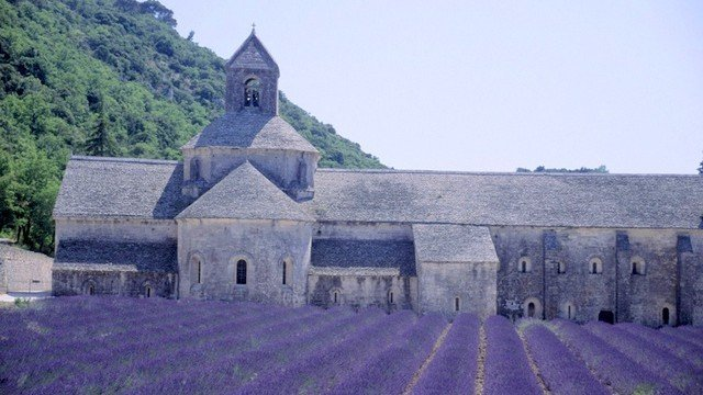 Glorious lavender fields and ancient abbeys during our Provence tours