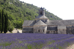 Tha magnificent Abbey of Senanque set in al lavender field