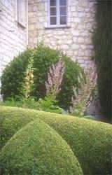 Stunning topiary and aromatic garden at a lovely 13th centry perched castle
