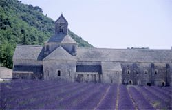 ancient abbey and lavender field from out heart of provence tour