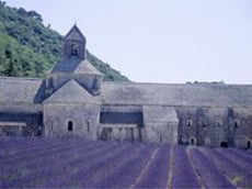 ancient abbey and lavander field from out heart of provence tour