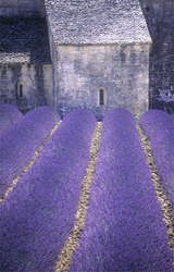 ancient monuments in the lavender fields