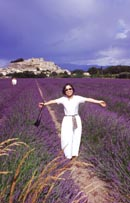 Glorious aromatic fields of lavender